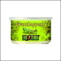 Aliment Grasshoppers pour reptiles