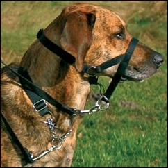 Harnais d'éducation pour chien
