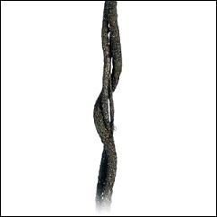 Liane flexible pour terrarium