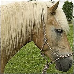 Licol en corde USG pour cheval